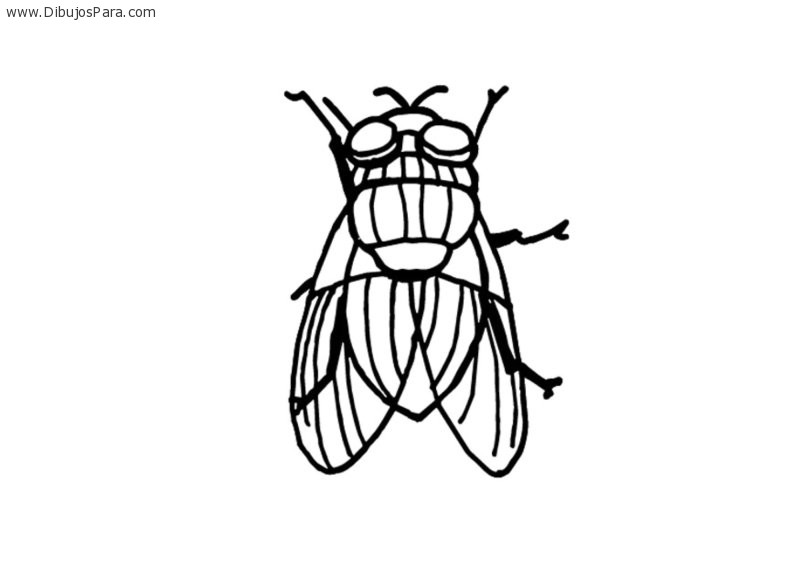 Dibujos de Insectos | Dibujos de Insectos para Pintar | Dibujos para ...