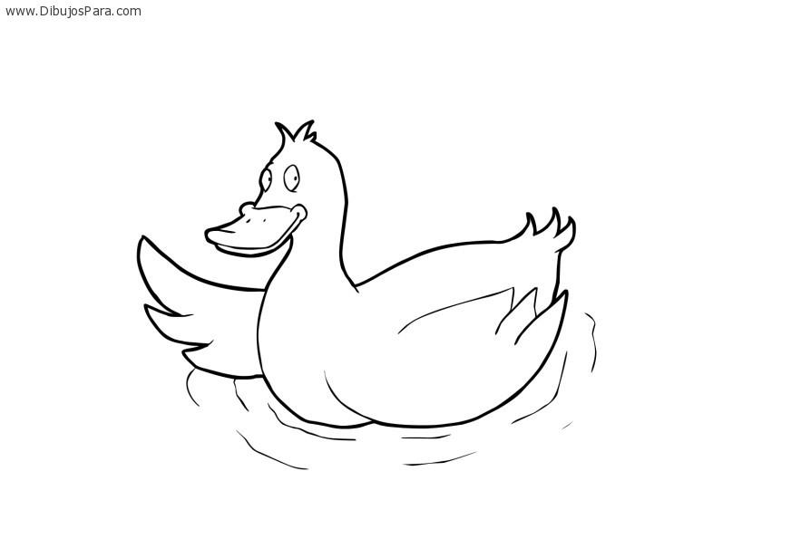 dibujo-pato-nadando.jpg