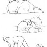Dibujo De Osos Polares Dibujos Para Colorear