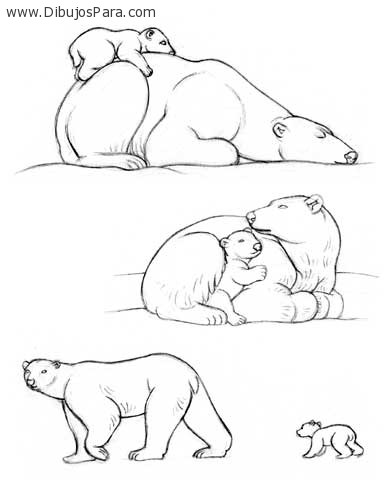 Dibujo de osos polares | Dibujos de Osos para Pintar | Dibujos para ...
