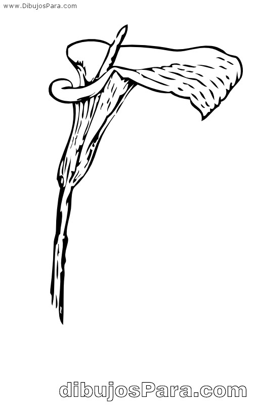 Dibujo de Flor de Cala  para Pintar  Dibujos para Colorear