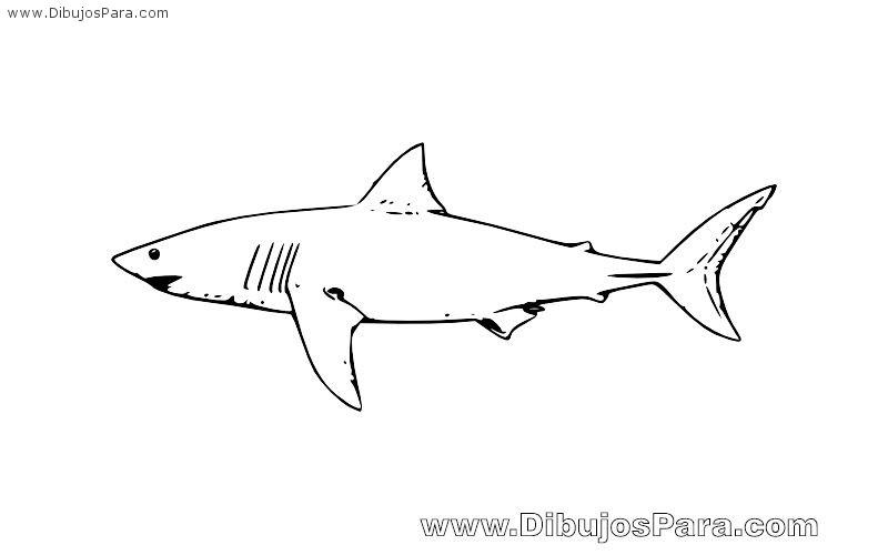 Dibujos Animados De Tiburones Para Colorear: Dibujo De Un Tiburón Blanco