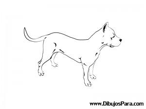 Dibujo de Perro Raza Pitbull