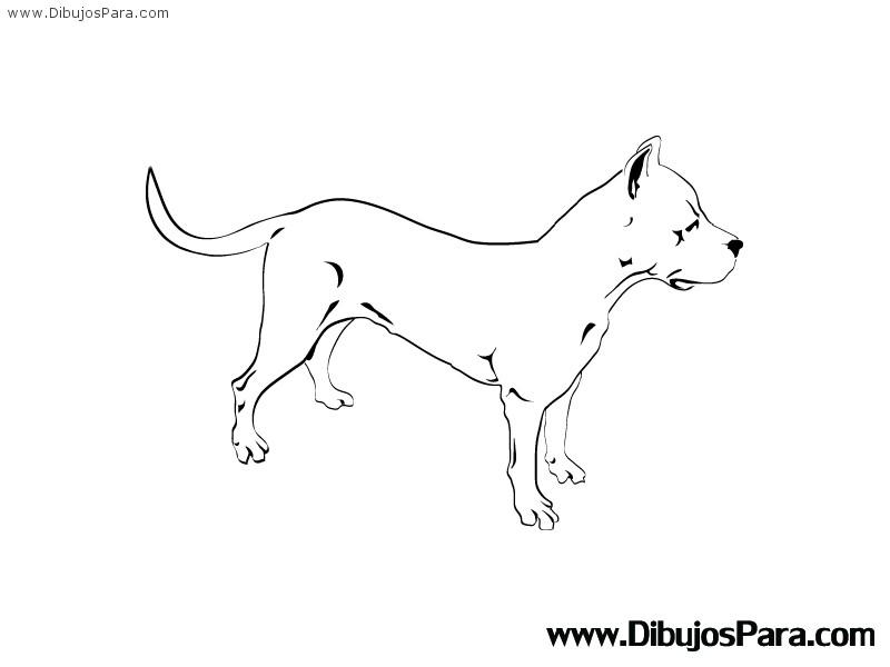 Dibujo De Perro Raza Pitbull Dibujos Para Colorear