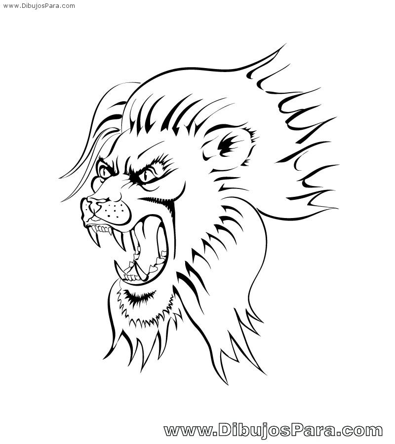 Dibujo de Len malo  Dibujos de Leones para Pintar  Dibujos para