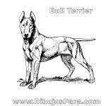 Dibujo de perro Bull Terrier